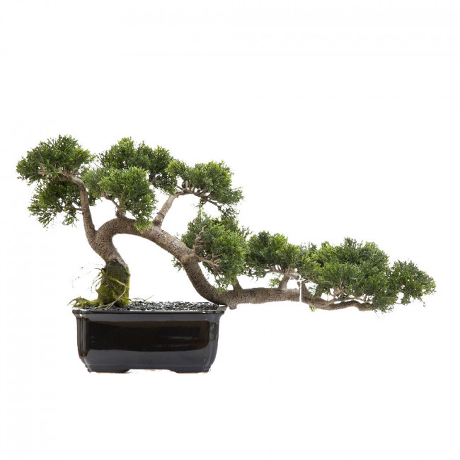 NWTURF ARTIFICIAL CONIFER BONSAI 40CM POTTED