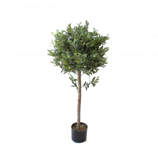 OLIVE BALL TOPIARY TREE 1.2M