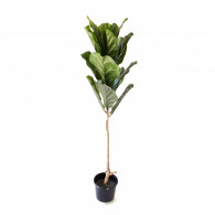 NWTURF Artificial SINGLE STEM FIDDLE LEAF FIG TREE 1.2M Indoor Outdoor Plastic Plant
