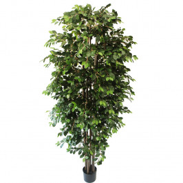 NWTURF ARTIFICIAL FICUS RETUSA WITH HANGING ROOTS 2.2M WITH 3186 LEAVES.