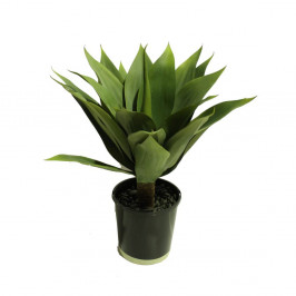 GIANT AGAVE GREEN 53CM
