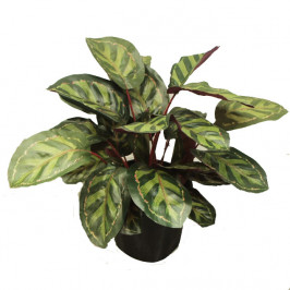 NWTURF ARTIFICIAL PEACOCK BUSH 45CM WITH 28 LEAVES POTTED
